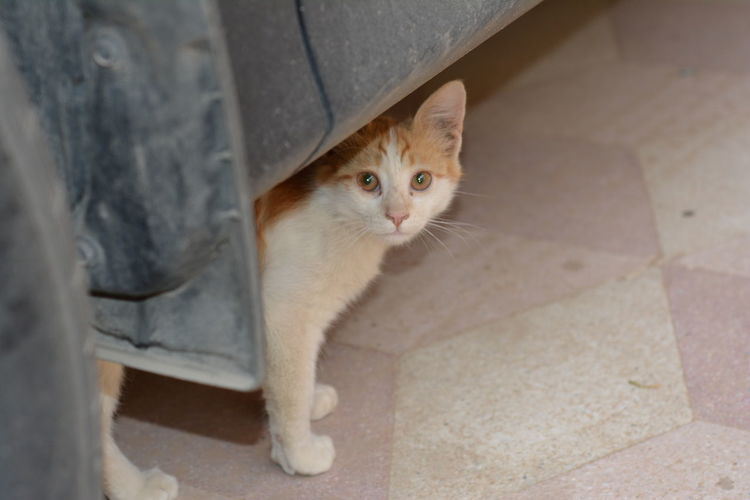 Shy cat hide under a car Animal Eye Cat Day Domestic Domestic Animals Domestic Cat Feline Flooring High Angle View Looking Looking At Camera Mammal No People One Animal Pets Portrait Shy Cat Tiled Floor Vertebrate Whisker