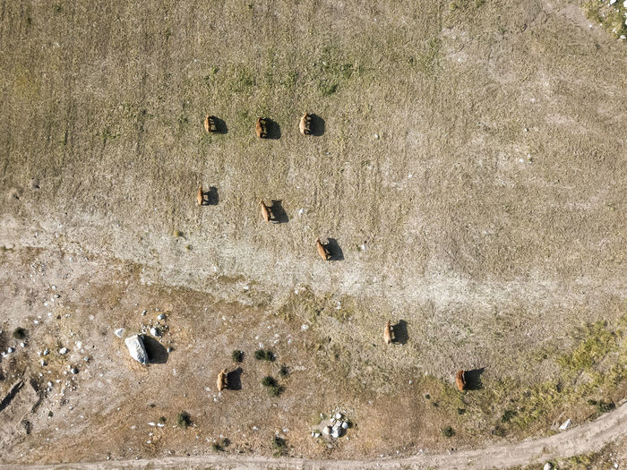 Overhead view of cows in a field Day High Angle View Land No People Outdoors Nature Sunlight Hole Full Frame Solid Textured  Wall - Building Feature Group Backgrounds Weathered Rock Field Shape Directly Above Built Structure Concrete Animals Farm Cows Steers