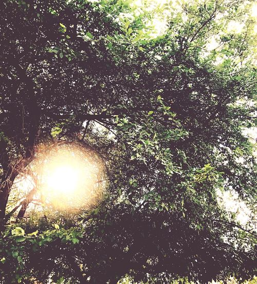 Tree Nature Sun Growth Outdoors Sunlight No People Beauty In Nature Branch Day Tranquility Leaf Forest Close-up Freshness Sky
