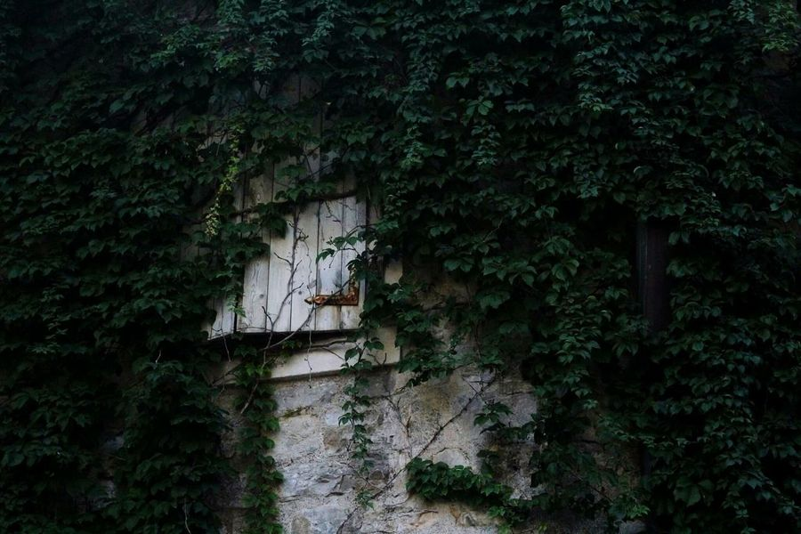 Tree Architecture Ivy Built Structure Plant Growth Building Exterior Outdoors No People Nature Roof Day Green Secret Secretwindow Window Naturetakingover