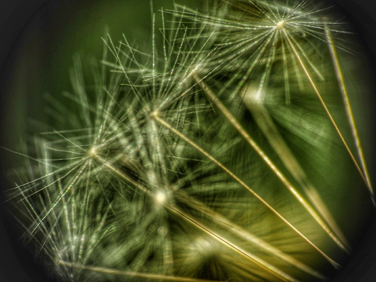 close-up, plant, selective focus, dandelion, beauty in nature, flower, growth, vulnerability, freshness, nature, fragility, no people, flowering plant, softness, extreme close-up, day, macro, dandelion seed, botany, outdoors, flower head