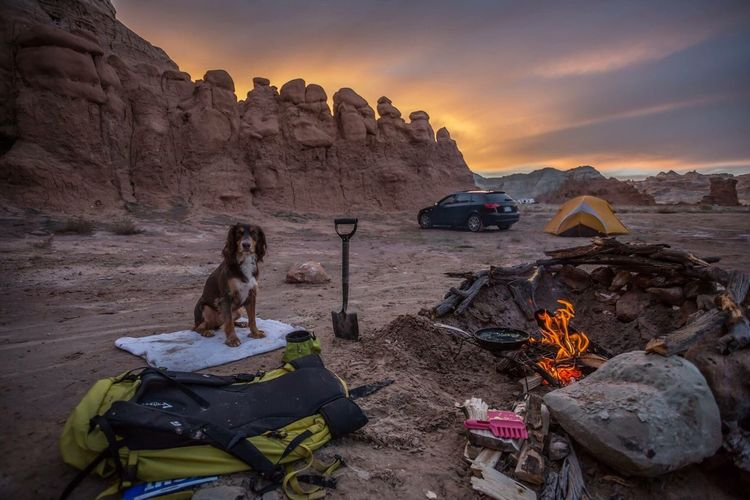 The Great Outdoors - 2017 EyeEm Awards Southern Utah  Camping Dogs Goblin Valley State Park, Utah Sunset Red Rocks  Desert Beauty In Nature Audi Camp Ground Perfect Utah