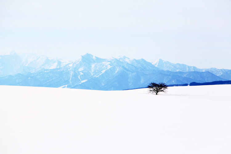 Tree Mountain Snow Cold Temperature Winter Snowcapped Mountain Pine Tree Wilderness Area Pinaceae Snowing