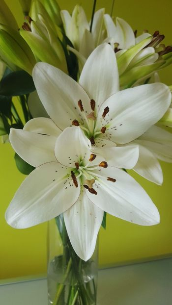 Florist Flowers Lily Flower Vase Vase Of Flowers Lillies Pretty White Flower Lilly