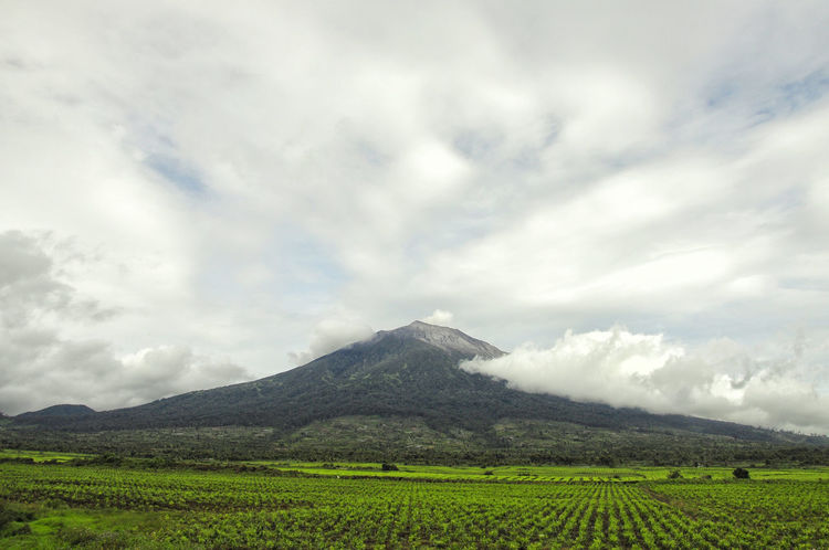 MT.KERINCI indonesian highest volcano mountain Agriculture Beauty In Nature Cloud - Sky Day Farm Field Growth INDONESIA Jambi Kayuaro Kerinci Kerincimount Landscape Mountain Nature No People Outdoors Padang Rural Scene Scenics Sky Tea Crop Tranquil Scene Tranquility Westsumatera