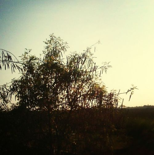 Life is sweeter Enjoying The Sun Hugging A Tree Enyoyingthelife