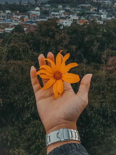 Midsection of person holding orange flower