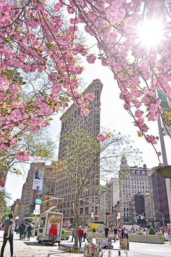 NYC Street Photography NYC Photography Pink Flower Flatiron Building Tree Plant Building Exterior Architecture Built Structure City Street Nature Sky Growth