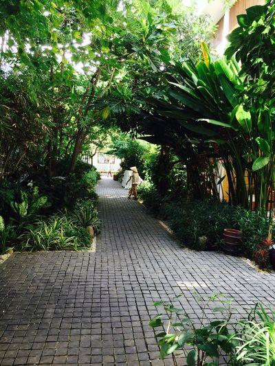 Basalt walkway Nature One Person Outdoors People Plant Tree Walkway