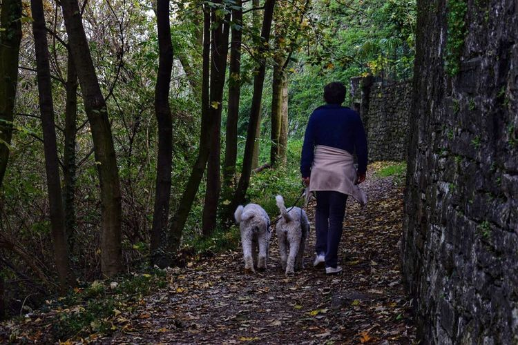 Rear view of man with dog in forest