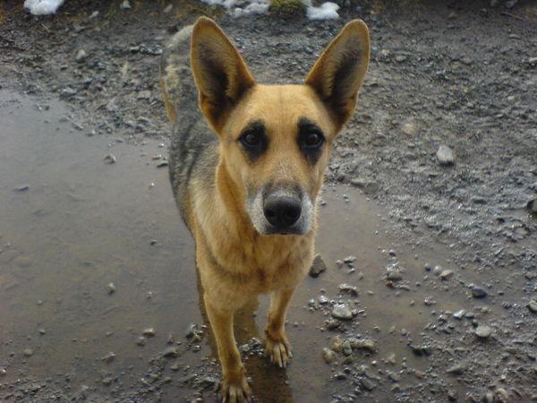 🐶 PERLA!!! Dog Pets One Animal No People Day Domestic Animals 🇧🇴 La Paz. Bolivia Beauty La Paz, Bolivia