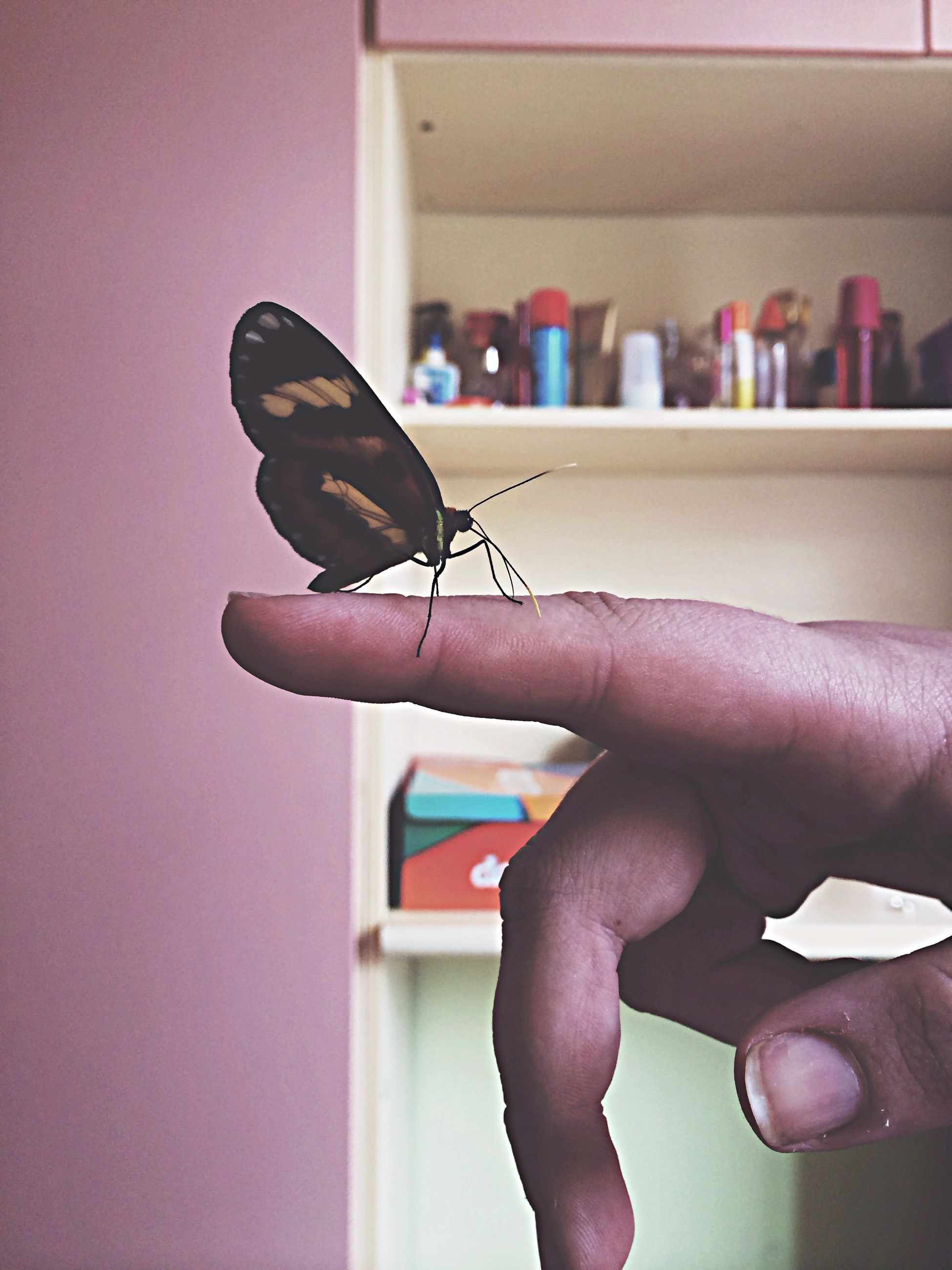 person, indoors, one animal, animal themes, holding, human finger, cropped, animals in the wild, part of, wildlife, focus on foreground, insect, close-up, unrecognizable person, bird, lifestyles, perching