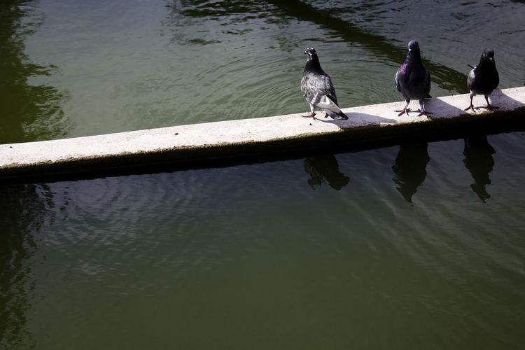 Birds perching on lake