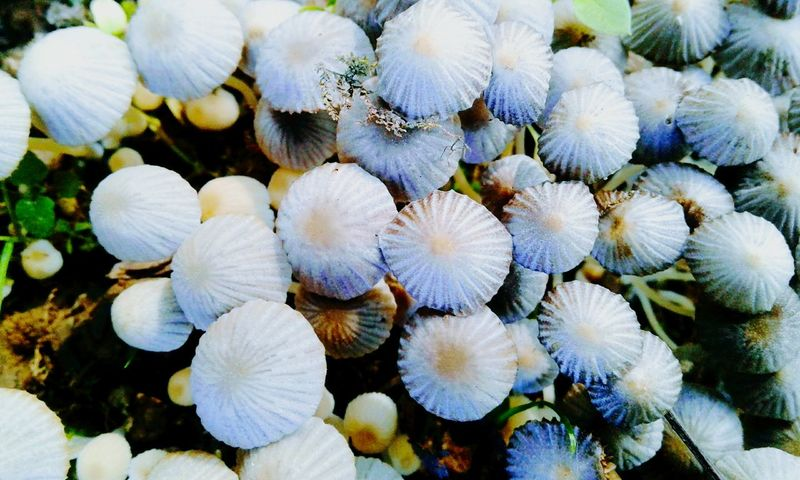 Nature Beauty In Nature Outdoors Growth No People Plant Close-up Day Fragility Flower Flower Head Mushroomphotography Fungi Growth Fungi Close Up Mushrooms 🍄🍄 Plant Beauty In Nature Flowers, Nature And Beauty Tree Nature Shadow Mushrooms Fungi🍄