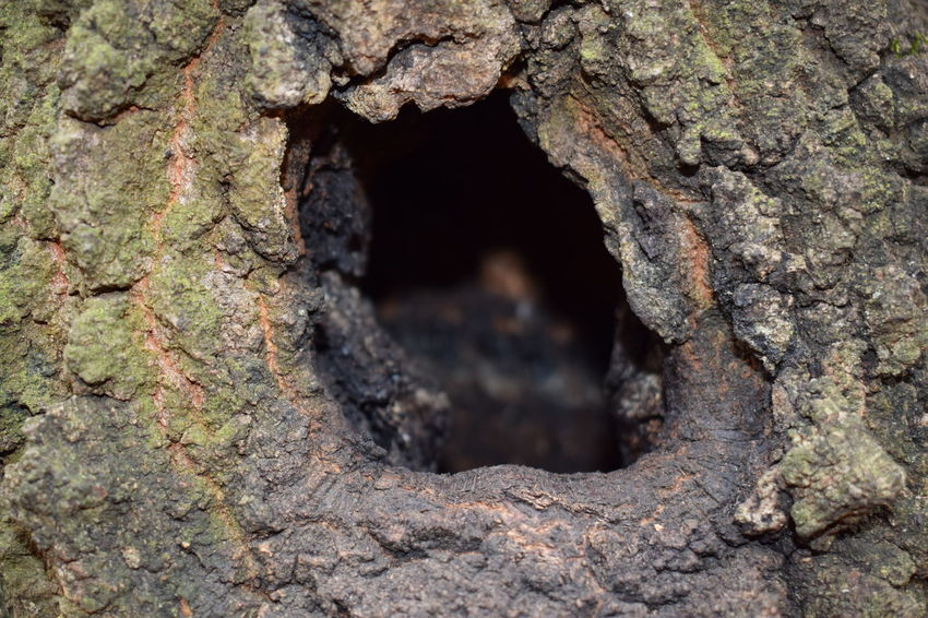Close-up Day Growth Hole Hole In The Tree Nature No People Outdoors Textured  Tree Tree Trunk