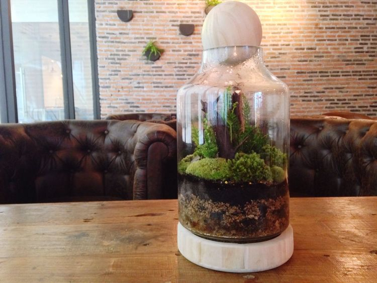 Little in the jar Glass Jar Little Tree On The Table Garden In The Jar Garden Design Small Garden In Cafe