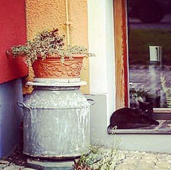 Cats Carinthia
