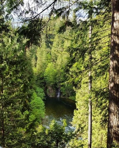Waterfall through the trees Forrest Suspension Bridge British Columbia Vancouver Canada Nature Water Tree Green Color Plant Life