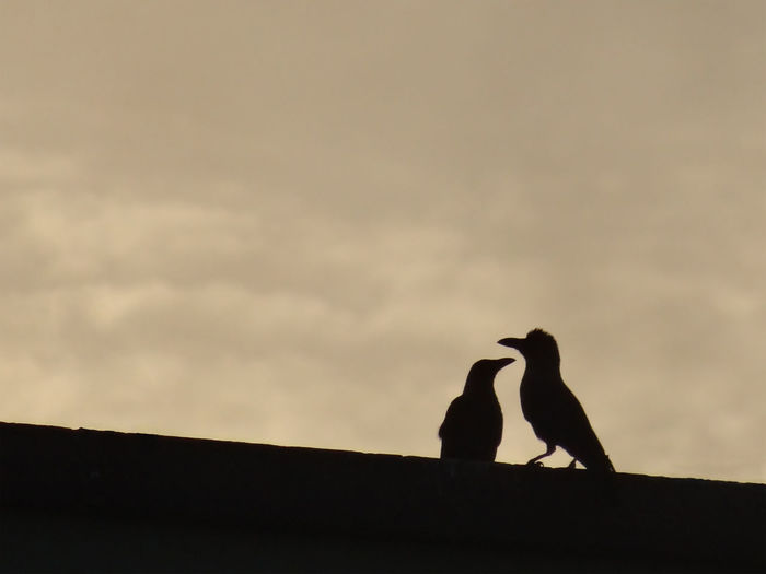 Low angle view of two birds perching on silhouette of man