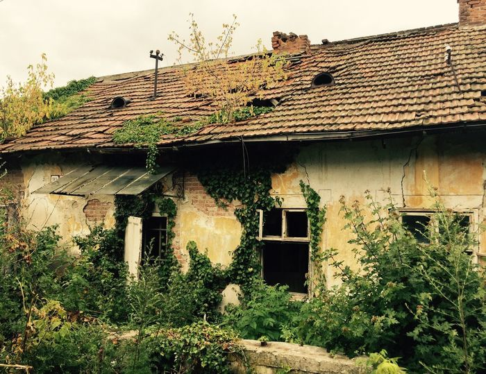 Old Old Buildings Wall House Building Exterior Building Ruins Green Color Green Architecture Built Structure Roof Plant No People Day Window Outdoors Tree Growth Tiled Roof  Lonely Lonely House Nostalgia Old Times Damaged Old Ruin