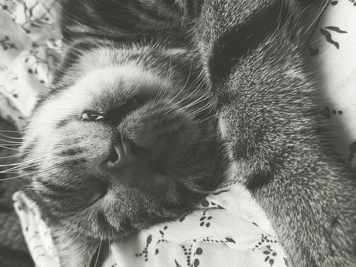 Close-up of tabby cat sleeping on bed