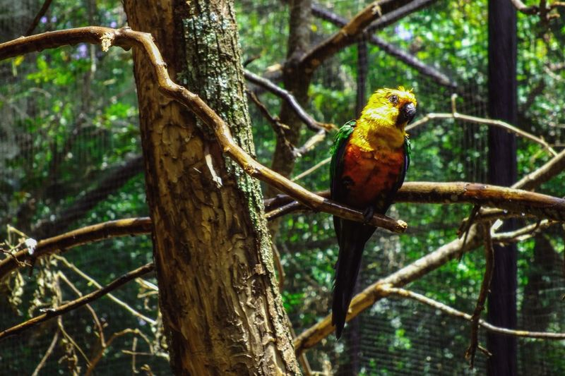 EyeEm Nature Lover Nature Photography FozDoIguaçu Parquedasaves Brazil Colors Bird Photography Birdspark Birds