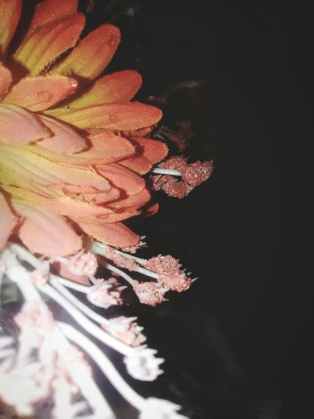 Flowers Ligth And Shadow Cellphone Photography Photography Colors Photo Android NOthIng Plastic