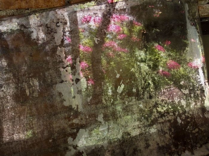 Architecture Blind Mirror Built Structure Close-up Day Flower Freshness Growth Nature No People Old Mirror Outdoors Pink Color Plant Shimmering Silver Tree