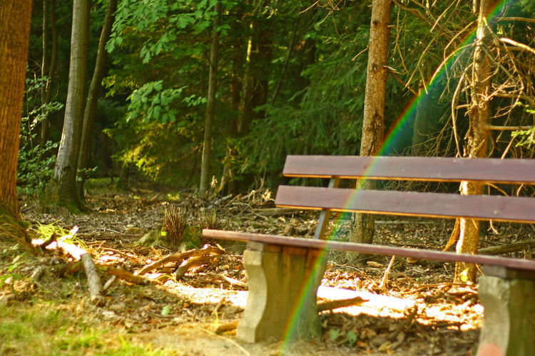 Absence Beauty In Nature Bench Day Forest Growth Land Leaf Nature No People Non-urban Scene Outdoors Park Bench Plant Plant Part Rainbow Rainbow In The Forest Seat Silence Tranquility Tree Tree Trunk Trunk Wood - Material WoodLand