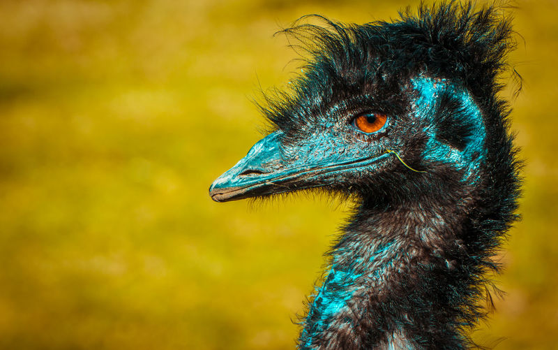 Ñandú... Patagonia Chile Animal Animal Body Part Animal Eye Animal Head  Animal Neck Animal Themes Animal Wildlife Animals In The Wild Beak Bird Close-up Day Eye Focus On Foreground Looking Looking Away Nature No People One Animal Ostrich Outdoors Profile View Scenics Vertebrate