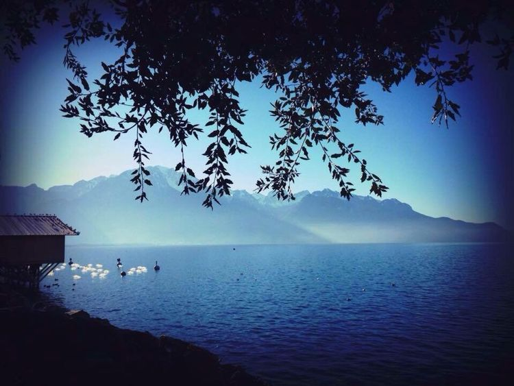 Tree Tranquil Scene Nature Calm Blue No People Water Tranquility Beauty In Nature