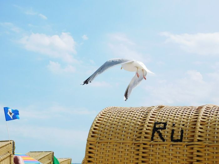 Low Angle View Of Seagull Flying Over Hooded Beach Chair Against Sky On Sunny Day