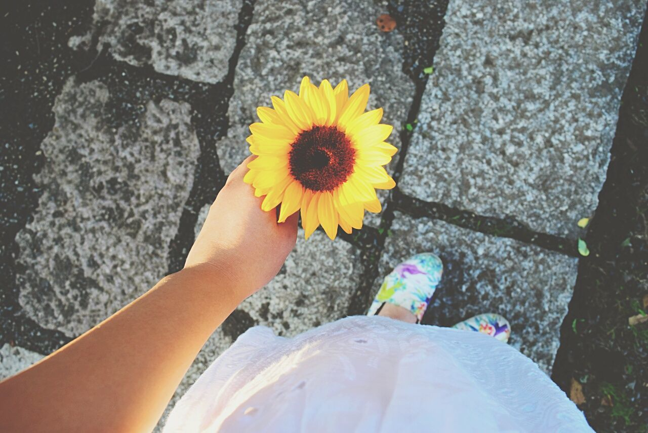 Low section of woman holding sunflower on footpath