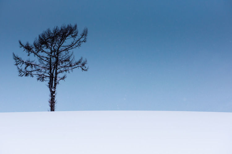 A lone leafless tree braves deep snow underneath a sullen sky - minimalistic white, blue-grey. Bare Tree Beauty In Nature Blue Branch Clear Sky Cold Temperature Day Frozen Landscape Lone Nature No People Outdoors Scenics Sky Snow Snowing Tranquil Scene Tranquility Tree Winter
