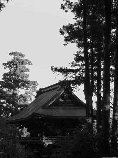 Monochrome Photography Trees Nature Photooftheday Photo Photography