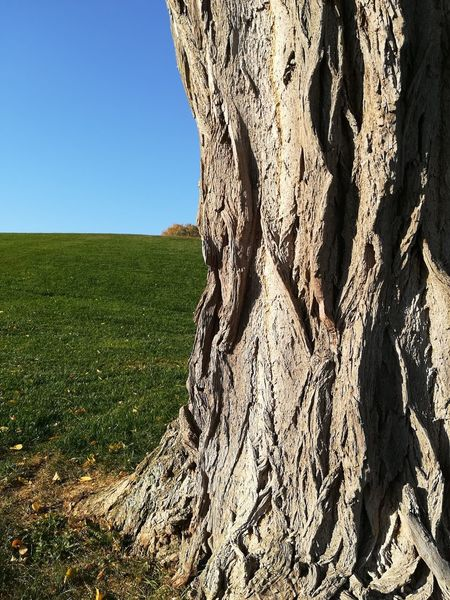 Green Color Blue Sky Old Tree Big Trunk Bark Texture Barks Of A Tree Centuries Old Kloster Lorsch UNESCO Welterbe Field Shadow Grass