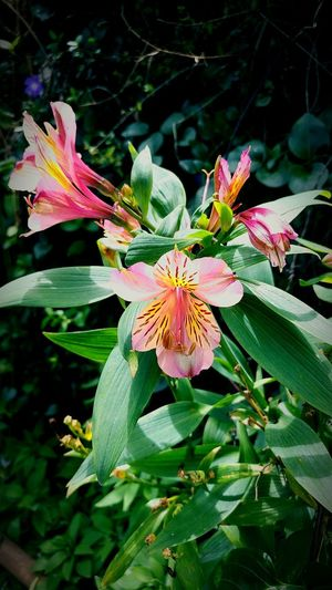 Petal Flower Beauty In Nature Nature Flower Head Plant Fragility