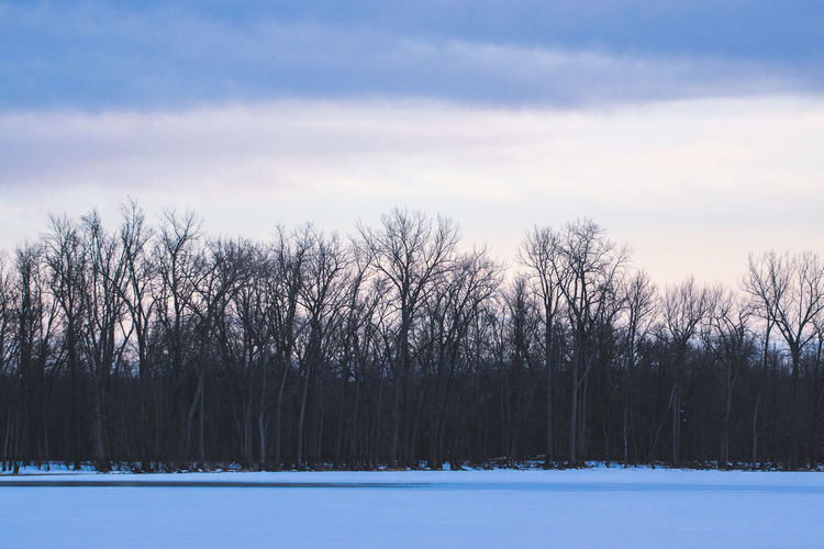 Canada Coast To Coast Cold Temperature Winter Tree Snow Scenics - Nature Tranquil Scene Tranquility Plant Beauty In Nature Bare Tree No People Sky Nature Non-urban Scene Environment Field Landscape Covering Land WoodLand