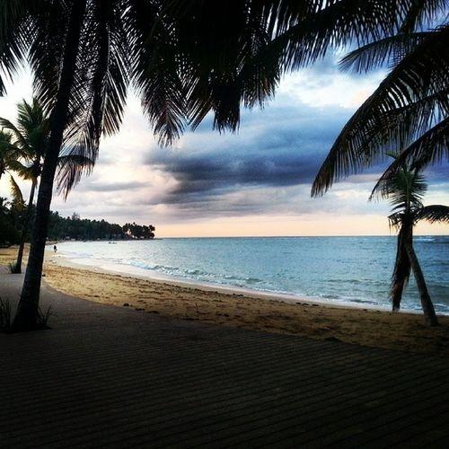 Günbatımı Okyanus Palmiye Ocean atlantik kumsal beach atlantic bulut cloud palm koy cove tranquility relax instapic instanice instagood karayipler caribbean las terrenas dominik dominican