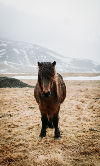 Portrait of horse standing on field against mountain