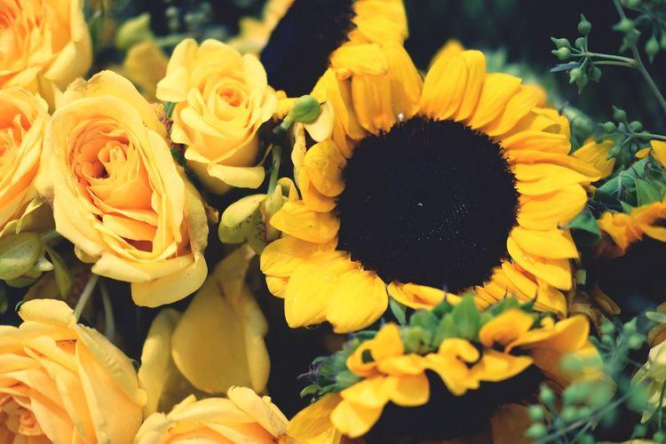 Sun flower and