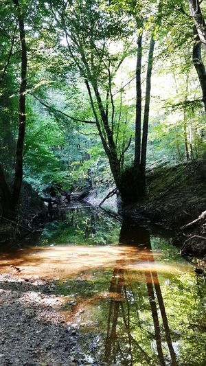 Neden hep insanlar kendilerini olduğundan farklı göstermeye çalışırlar ki? İğneada Longoz Ormanı Lansdcape Travel Great Outdoors Ineedamiracleformylostsoul Eye4photography  EyeEm Nature Lover Nature Reflections Water Reflections