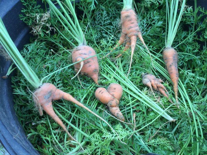 EyeEmNewHere Plant Just Pick Babies