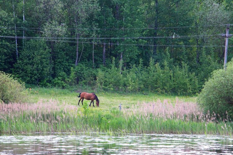 Forest Animal Themes Horse Photography  Horse Life Horses Horse One Animal Mammal Nature Outdoors No People Domestic Animals Full Length Beauty In Nature Grass Water Lake View Lake Summer Day Rural Place Rural Scene Ruralphotography