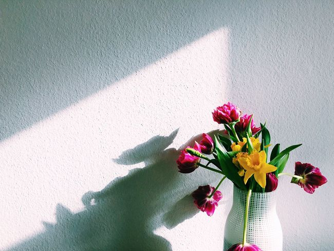Flower Shadow Sunlight Day Flower Head Nature No People Fragility Freshness Beauty In Nature Close-up Bouquet