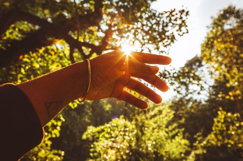 Feel the warmth Lens Flare Sunlight Warmth Human Hand Hand Human Body Part One Person Tree Sunlight Holding Unrecognizable Person Nature Lifestyles Human Finger Sky Day
