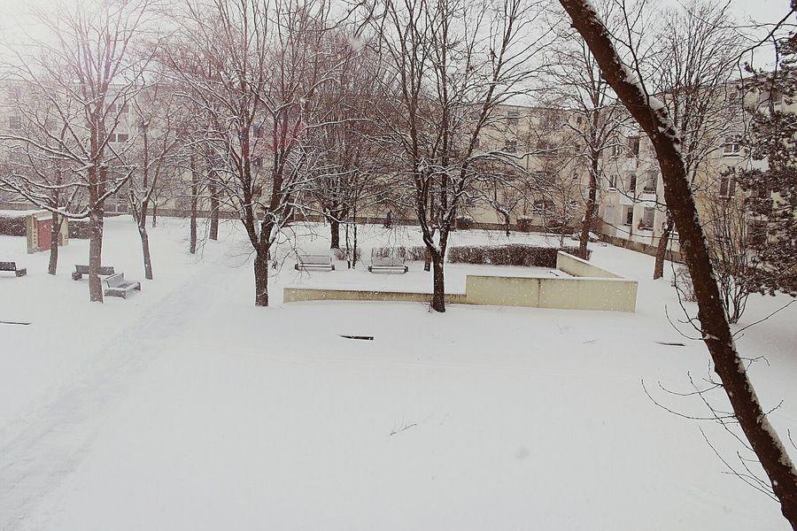 Schnee Snow Winter Kalt Cold Winter ❄⛄ Cold Temperature Home