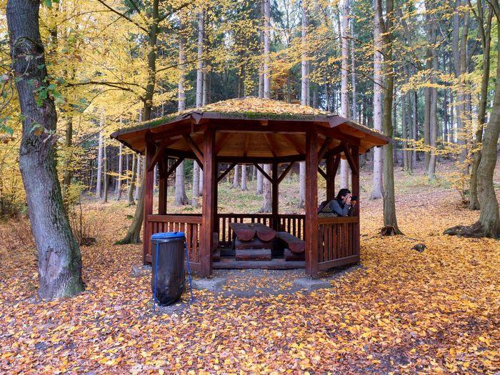 Gazebo in forest during autumn