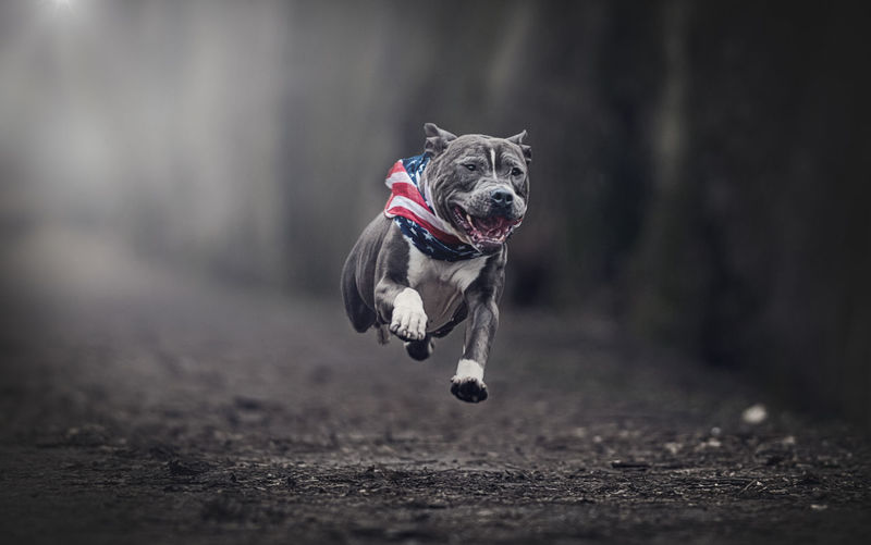 Portrait of dog running