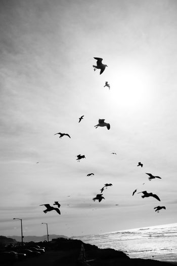 Flying Large Group Of Animals Flock Of Birds Ocean Seaside Beauty In Nature The Great Outdoors - 2017 EyeEm Awards The Photojournalist - 2017 EyeEm Awards Shadows & Lights Sommergefühle Eyeemphotography From My Point Of View Taking Photos Black And White Photography